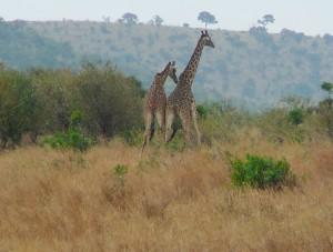 P1060939.1-Kenia